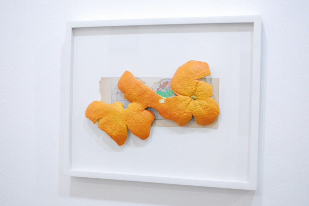 fruits.flowers.appliances06