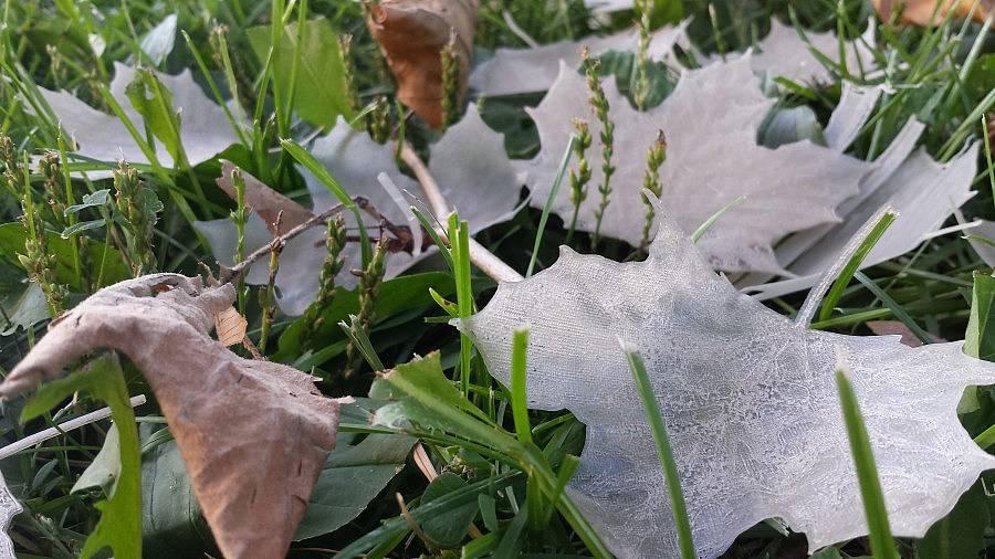 Leaves_2016